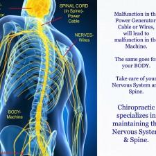 Spine-nerves