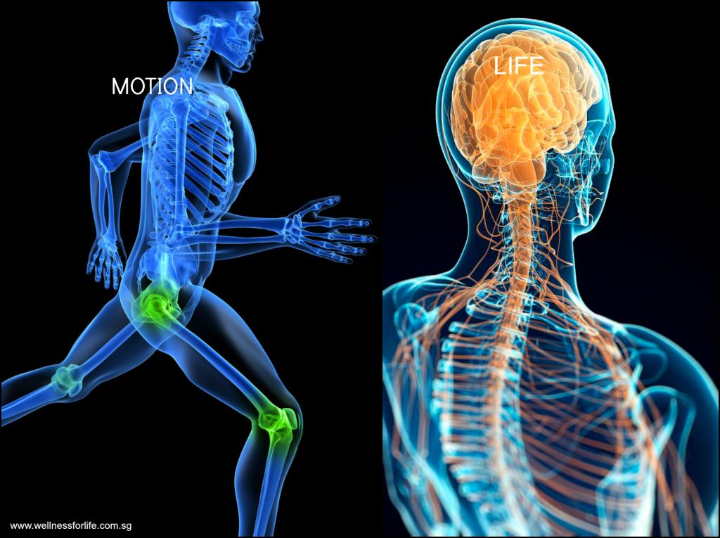 Motion-life-brain
