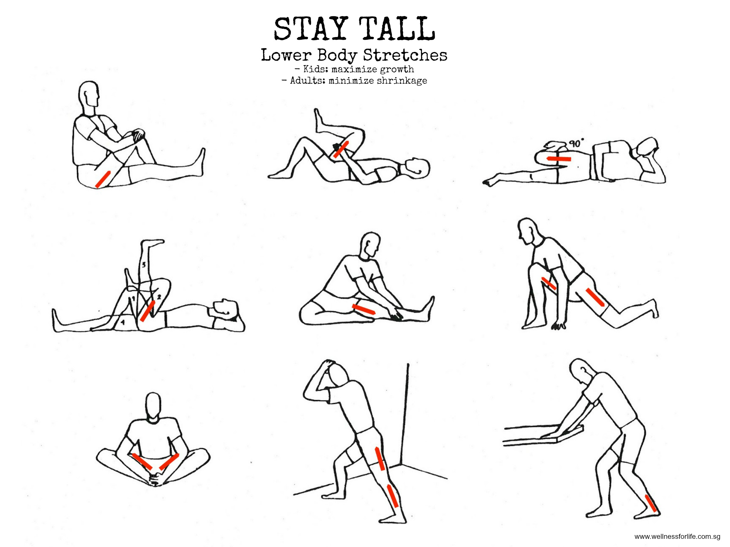 Wellness for Life Chiropractic | Stay Tall With Lower Body ...