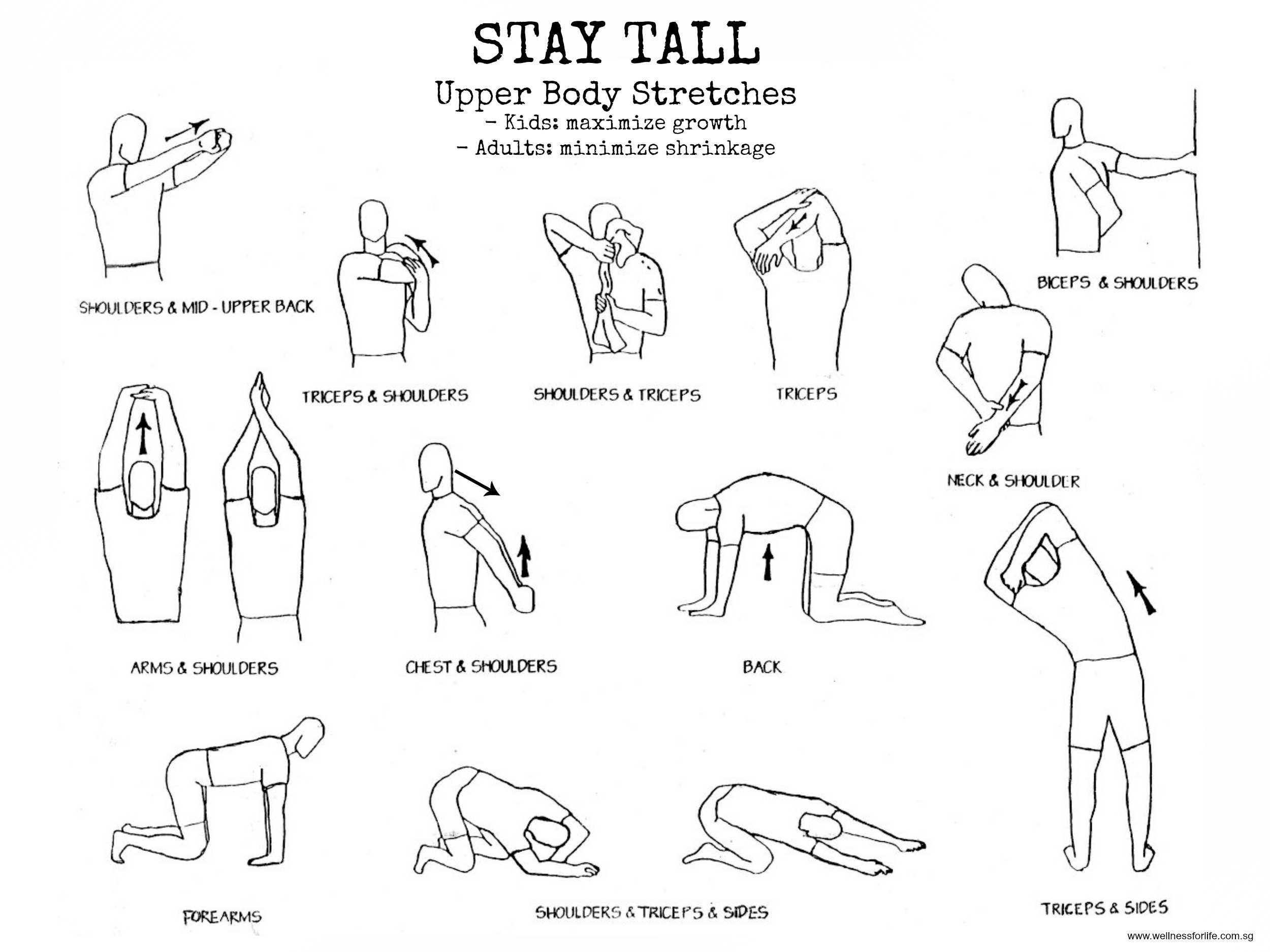 Wellness for Life Chiropractic | Stay Tall With Upper Body ...